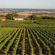 Puligny-Montrachet Premier cru
